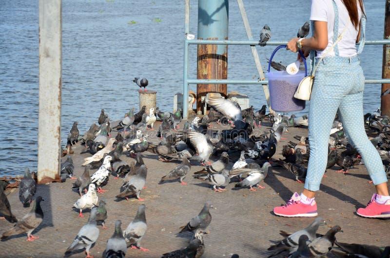 Pájaro de alimentación en el frente del río del templo de Nonthaburi fotografía de archivo libre de regalías