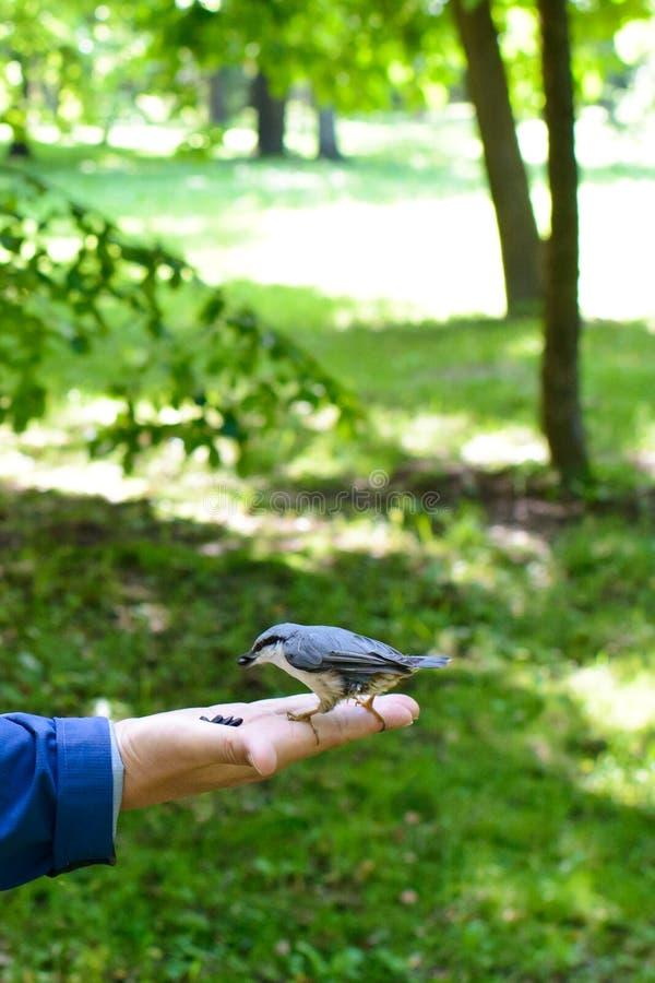 Pájaro de alimentación en la palma foto de archivo libre de regalías