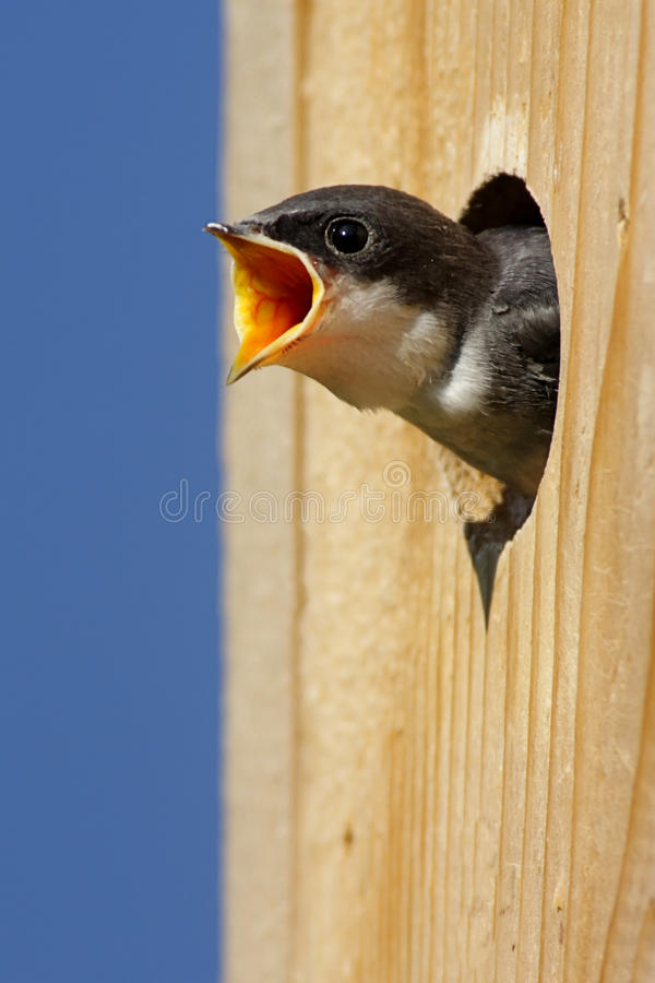 Pájaro de bebé en una casa del pájaro imágenes de archivo libres de regalías