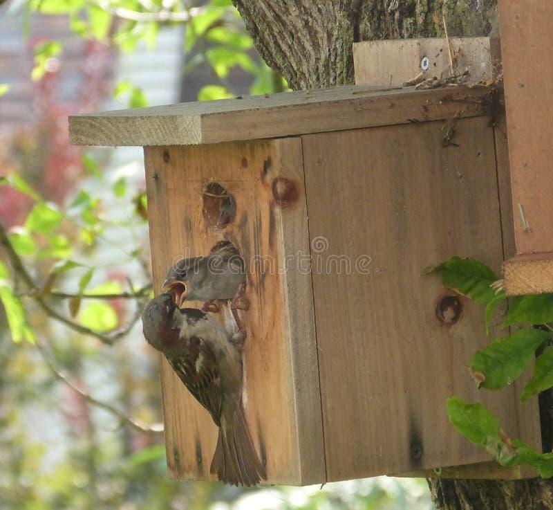 Pájaro de bebé que es FED fotografía de archivo