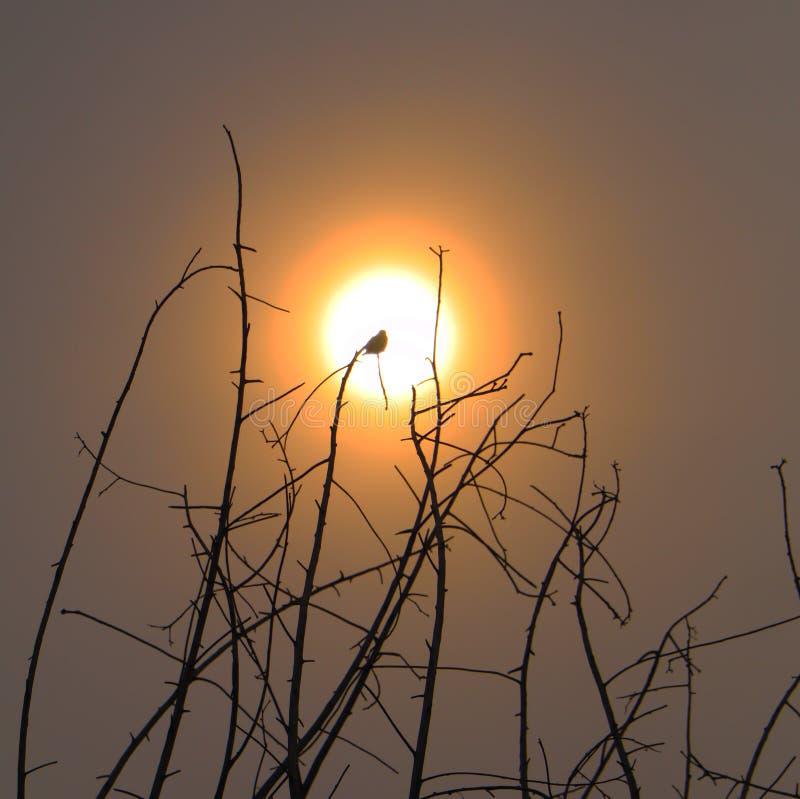 Pájaro de cobre del perro de aguas del forjador que se relaja en árbol enfrente del sol fotografía de archivo
