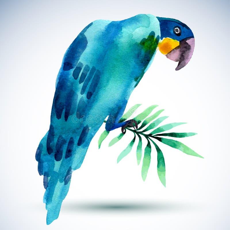 Pájaro de la acuarela Loro azul aislado en el fondo blanco ilustración del vector