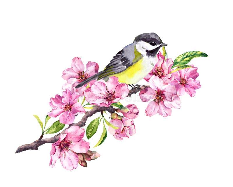 Pájaro de la canción en rama de la flor de cerezo con las flores de Sakura de la primavera en primavera watercolor stock de ilustración