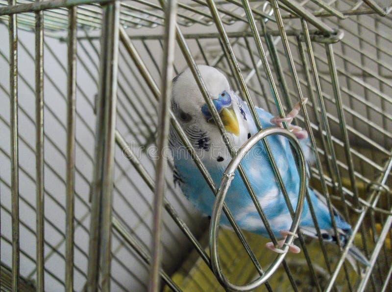 Pájaro de la jaula imagen de archivo libre de regalías