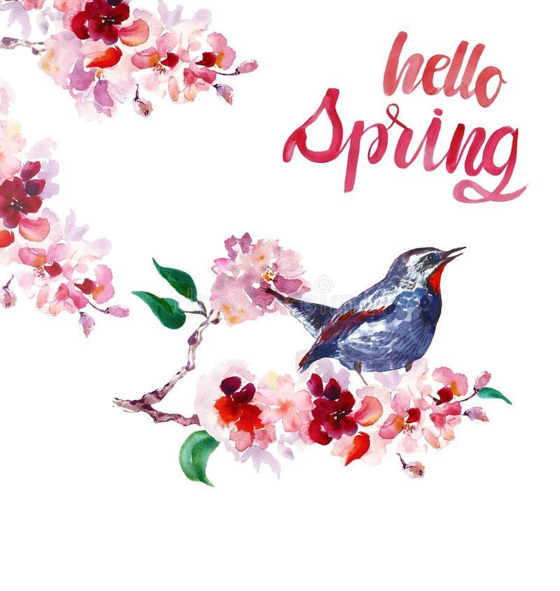 Pájaro de la primavera de la acuarela en rama de árbol de Sakura Flor de cerezo pintada a mano, aislada ilustración del vector