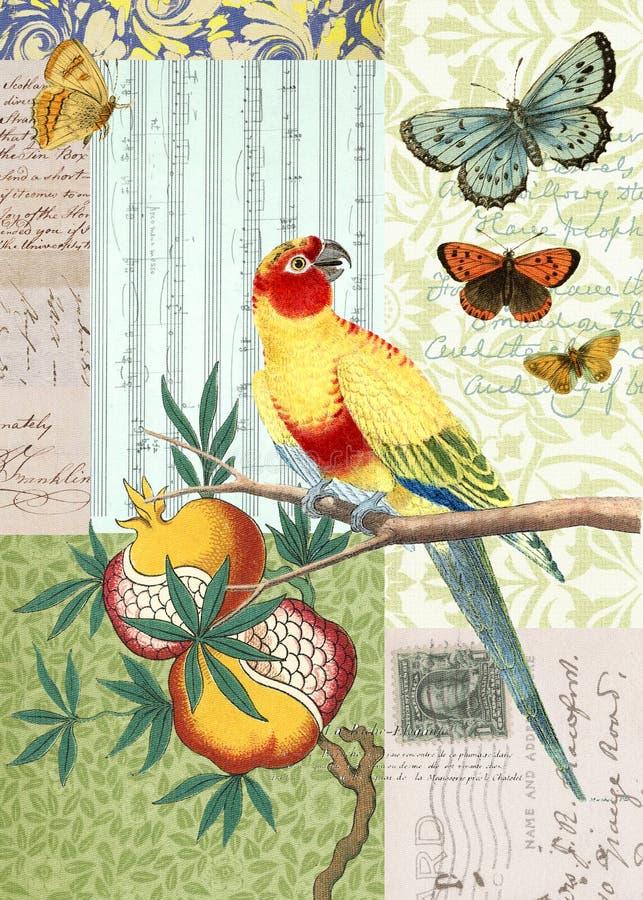 Pájaro de la vendimia y collage de la postal de la mariposa ilustración del vector