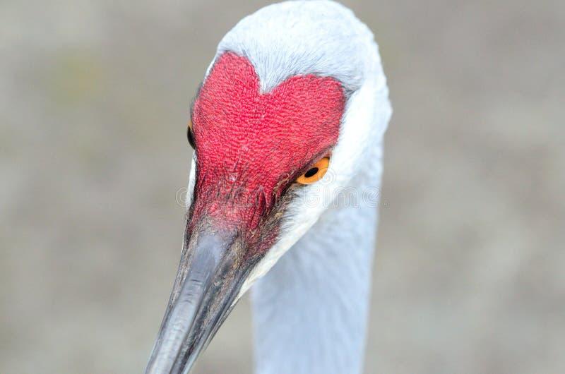 Pájaro de las tarjetas del día de San Valentín fotografía de archivo libre de regalías