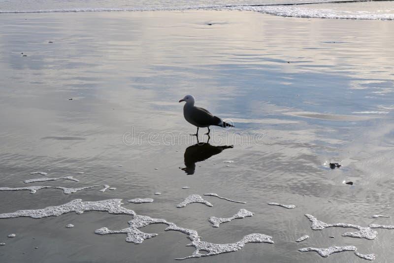 Pájaro de mar en Stinson fotos de archivo libres de regalías