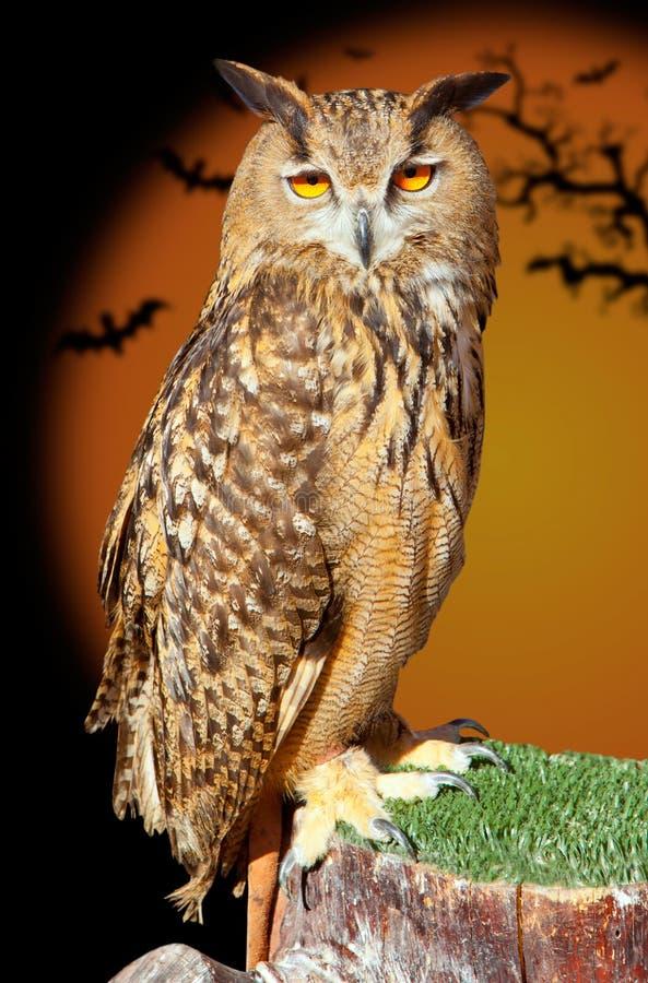 Pájaro de noche del buho de águila del bubón del bubón fotografía de archivo libre de regalías