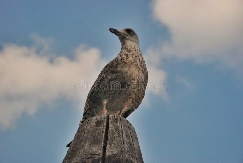 Pájaro de Venicean fotos de archivo