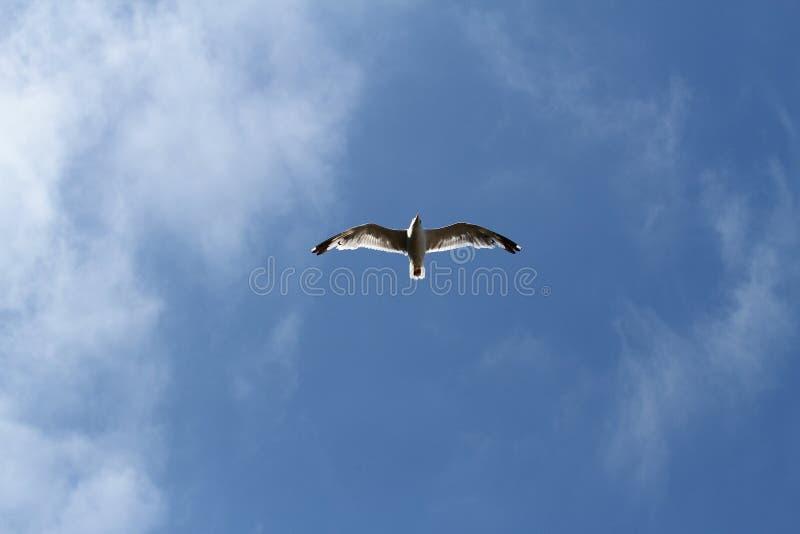 Pájaro de vuelo imágenes de archivo libres de regalías