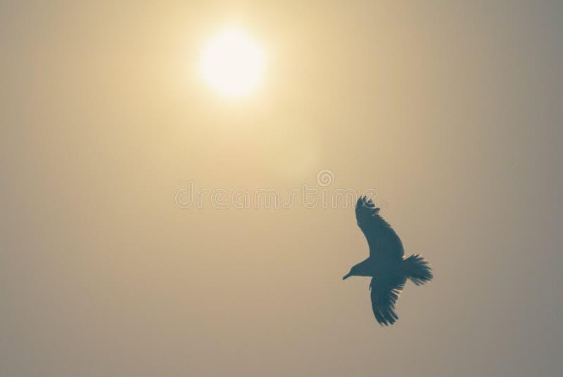 Pájaro de vuelo con el sol caliente fotografía de archivo libre de regalías
