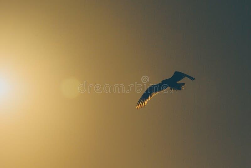 Pájaro de vuelo con el sol caliente en el cielo imagenes de archivo
