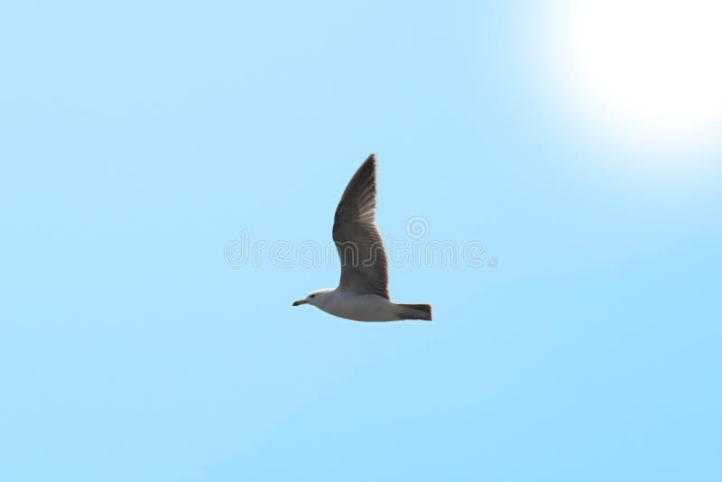 Pájaro de vuelo en el cielo imagenes de archivo