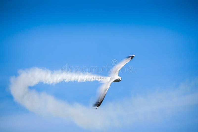 Pájaro de vuelo rápido de la gaviota con la estela de vapor del humo imagen de archivo