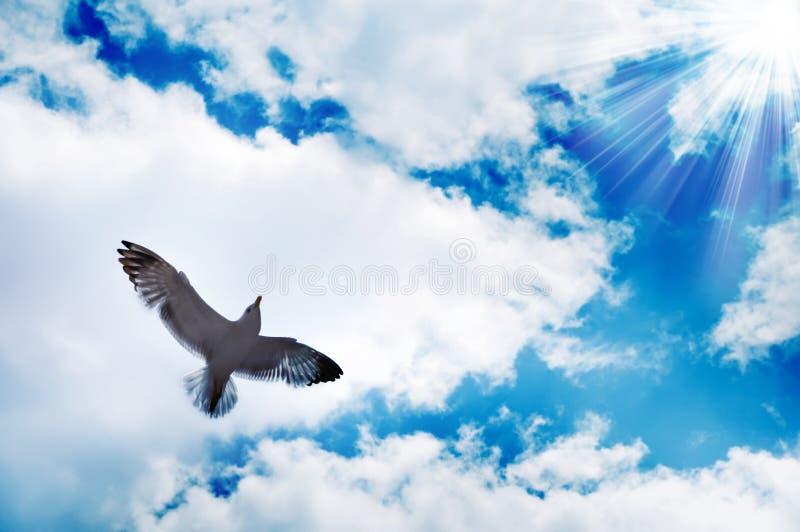 Pájaro de vuelo y cielo azul fotografía de archivo libre de regalías