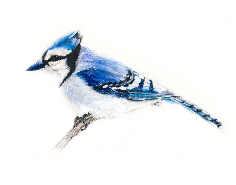 Pájaro del arrendajo azul en una rama ilustración del vector