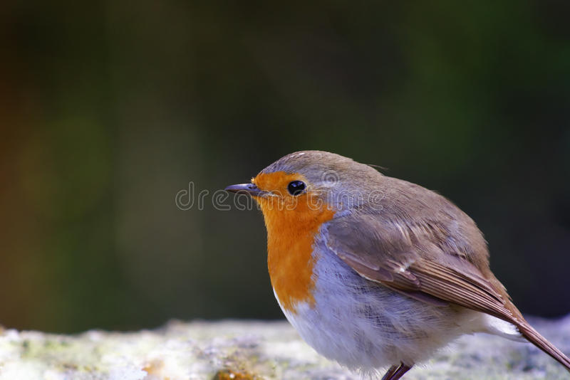Pájaro del bosque fotografía de archivo