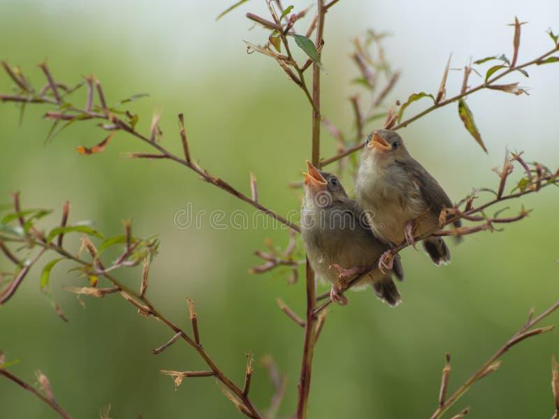Pájaro del canto que disfruta de tomar el sol fotografía de archivo libre de regalías