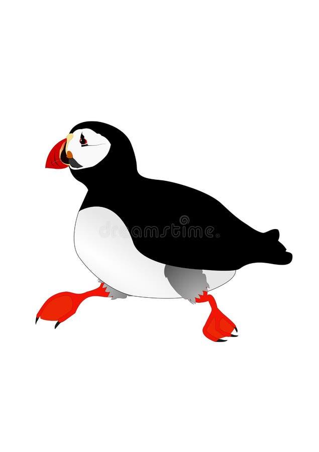 Pájaro del frailecillo libre illustration