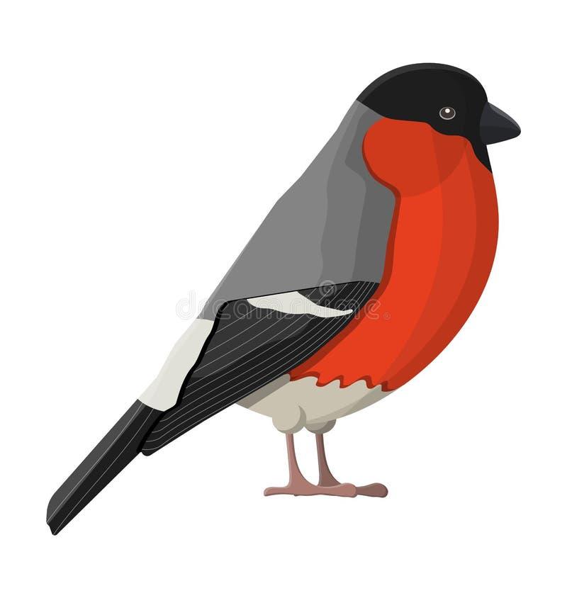 Pájaro del invierno del piñonero aislado en el fondo blanco stock de ilustración