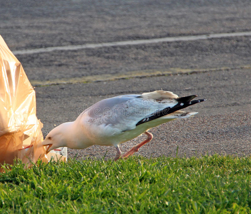 Pájaro del limpiador imágenes de archivo libres de regalías