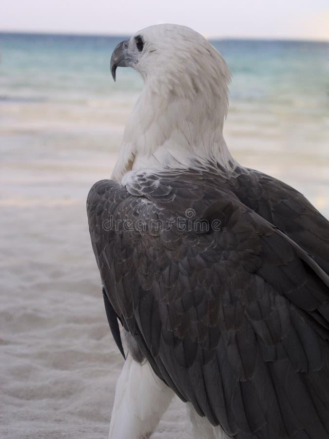 Pájaro del Longing fotografía de archivo libre de regalías