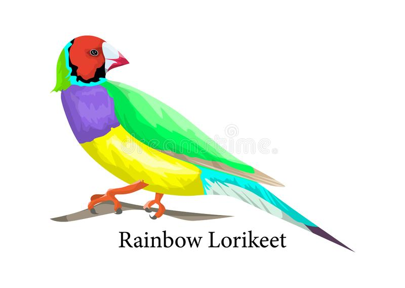 Pájaro del lorikeet del arco iris Animal exótico en naturaleza stock de ilustración