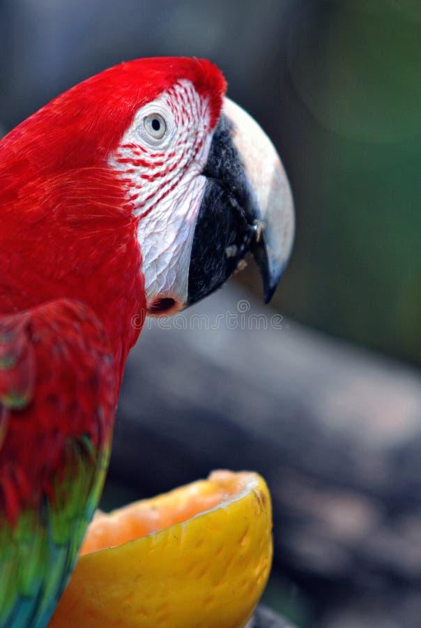 Pájaro del loro en un parque zoológico imagenes de archivo