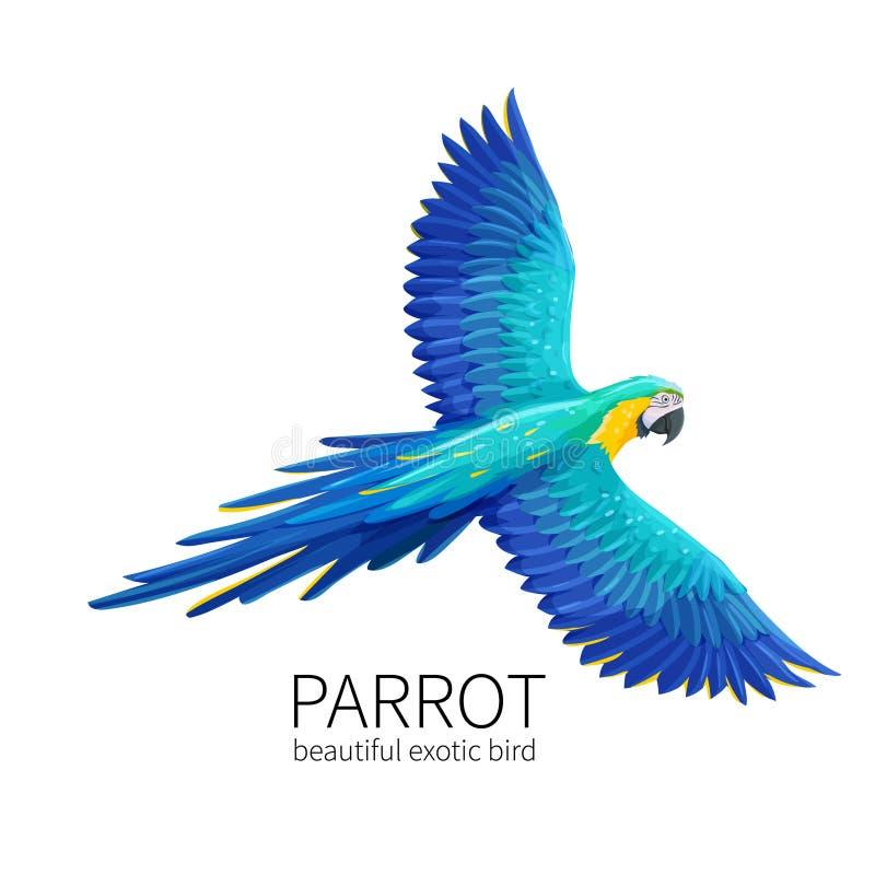 Pájaro del loro del vector ilustración del vector
