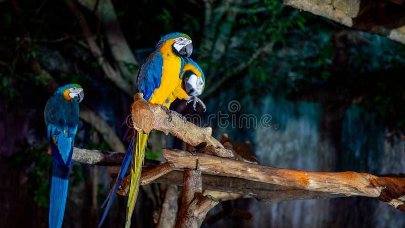 Pájaro del Macaw que hace frente a la cámara fotos de archivo libres de regalías