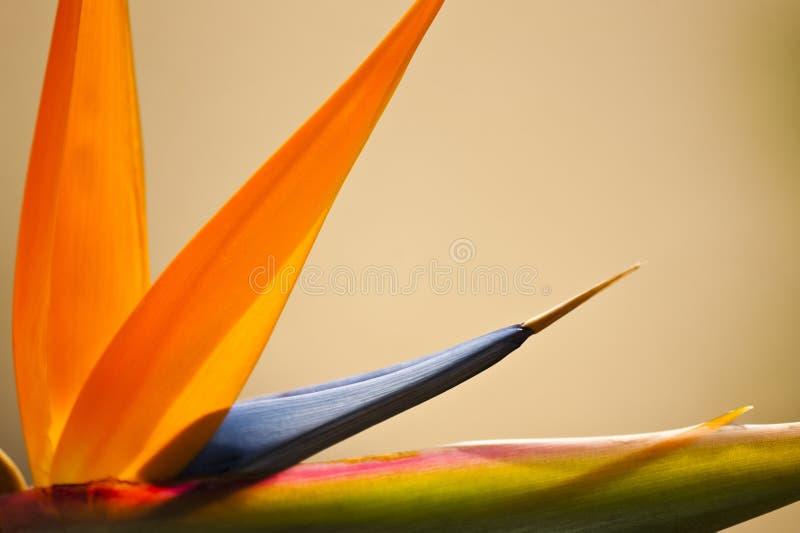 Pájaro del paraíso abstracto imagen de archivo libre de regalías