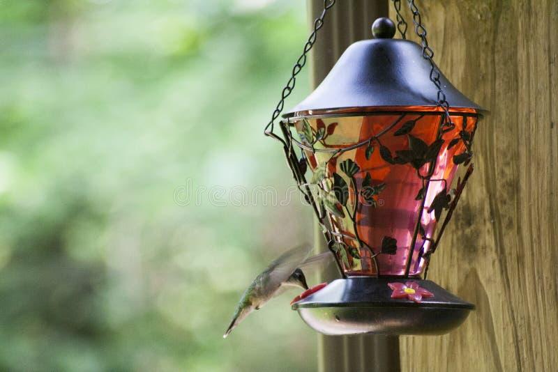 Pájaro del tarareo que alimenta 6 fotografía de archivo libre de regalías