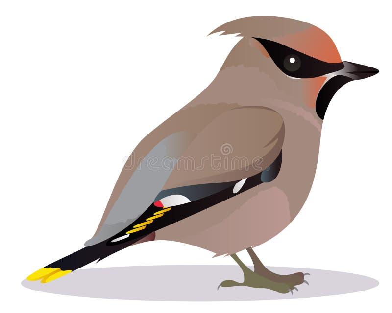 Pájaro del Waxwing libre illustration