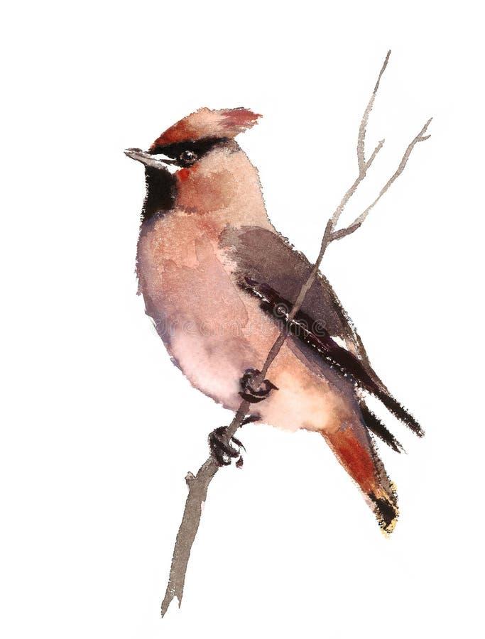 Pájaro del Waxwing en el ejemplo de la caída de la acuarela de la rama pintado a mano ilustración del vector