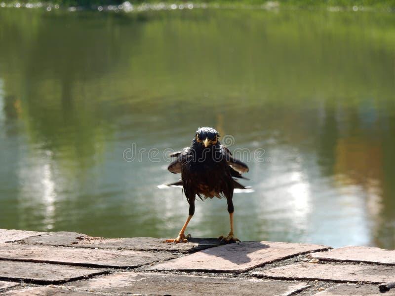 Pájaro divertido fotos de archivo