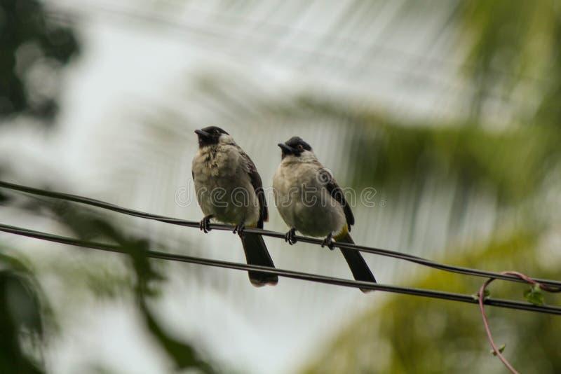 Pájaro dos imagen de archivo