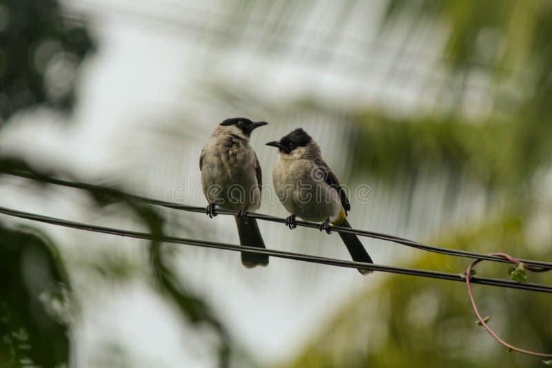 Pájaro dos foto de archivo libre de regalías