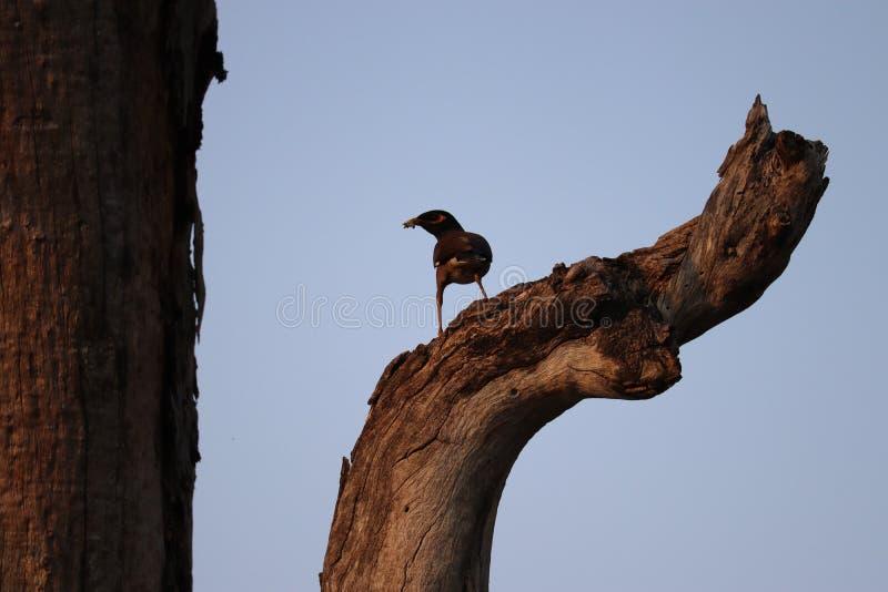 Pájaro en árbol fotografía de archivo libre de regalías