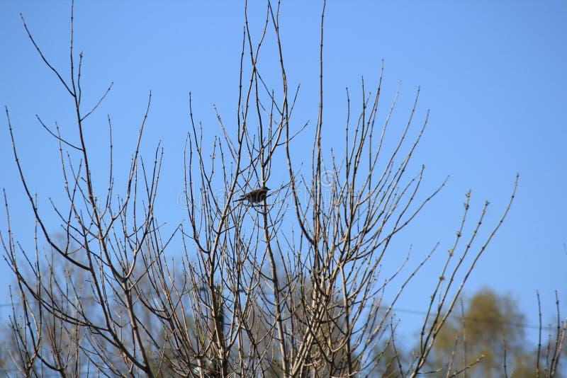 Pájaro en árbol imagen de archivo