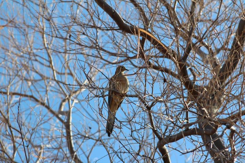 Pájaro en árbol muerto imagen de archivo