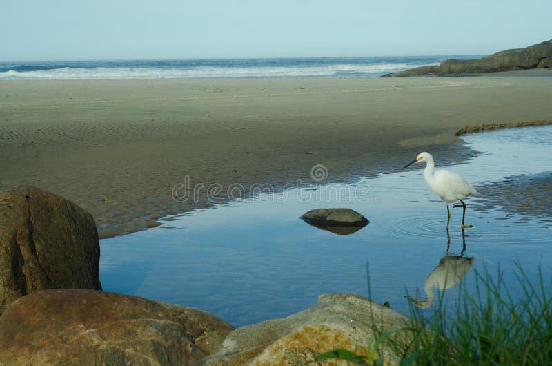 Pájaro en agua foto de archivo