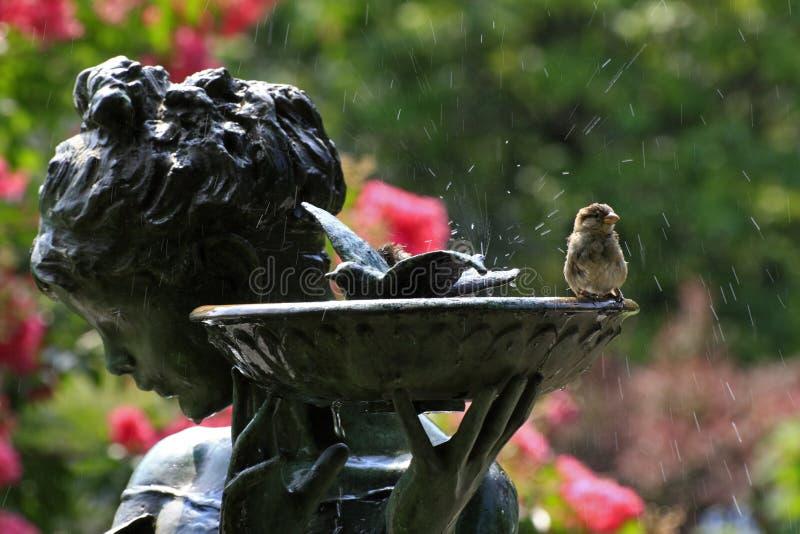 Pájaro en birdbath imagen de archivo libre de regalías
