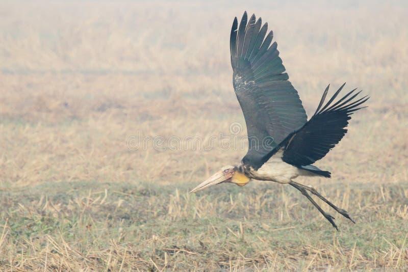 Pájaro en campo imagen de archivo libre de regalías