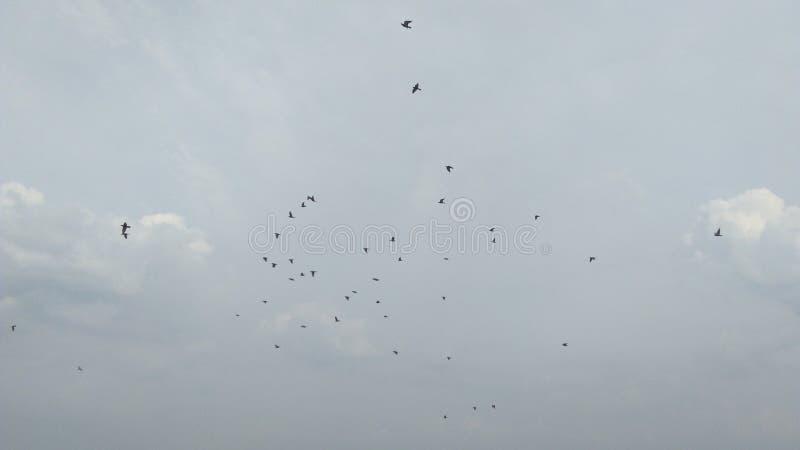 Pájaro en cielo fotos de archivo
