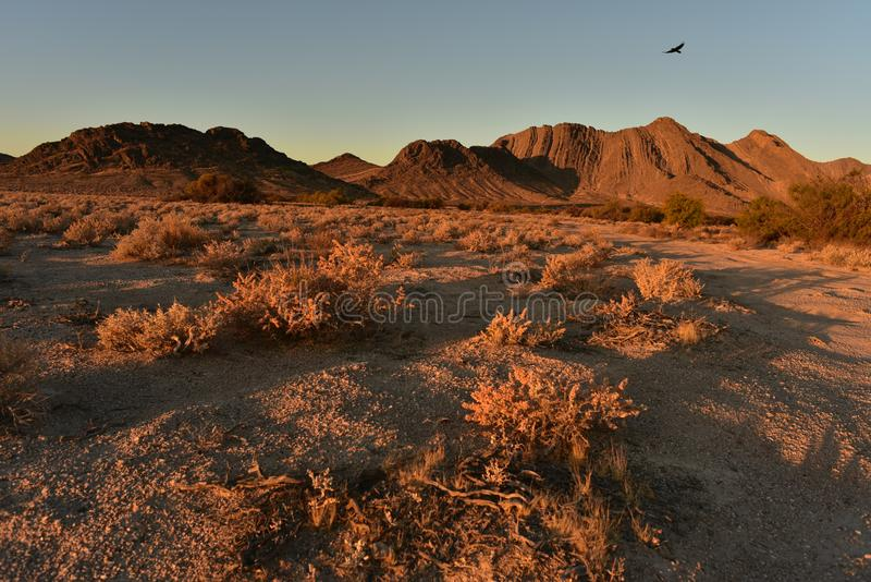 Pájaro en cielo sobre paisaje de oro del desierto de la mañana fotografía de archivo