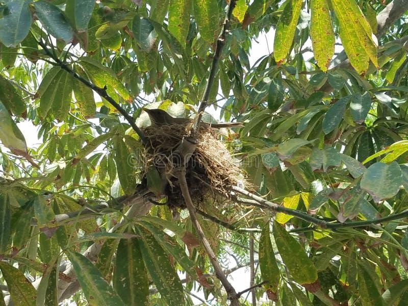 Pájaro en el árbol imágenes de archivo libres de regalías