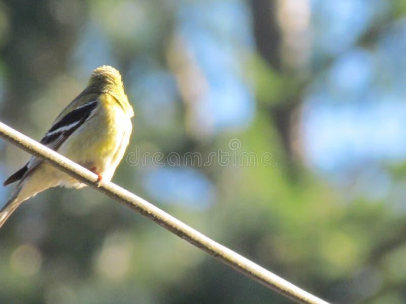 Pájaro en el alambre foto de archivo libre de regalías