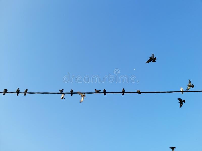 Pájaro en el alambre eléctrico aislado con el fondo del cielo foto de archivo