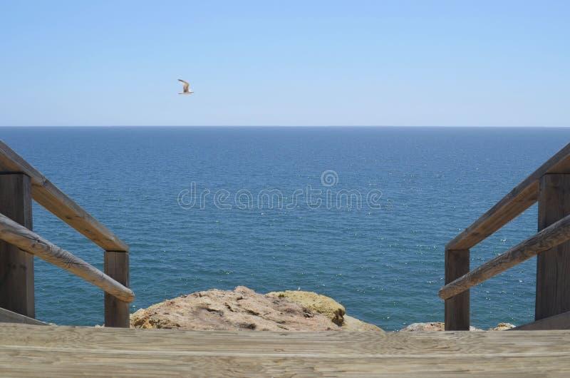 Pájaro en el horizonte inmenso del mar abierto imágenes de archivo libres de regalías